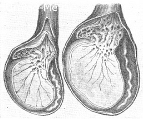 Тянет яички причины 42