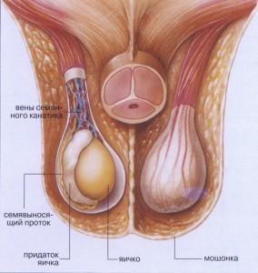 Тянет яички причины 43